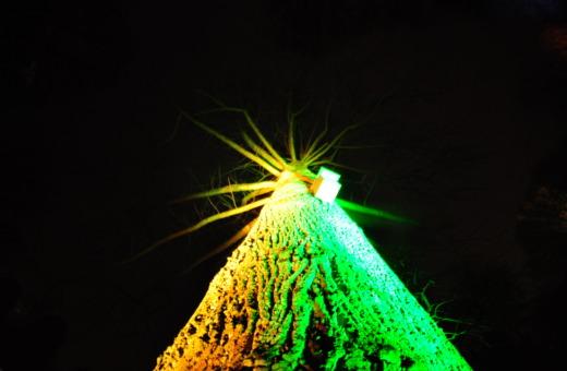 Colorful illuminated tree at Parkleuchten