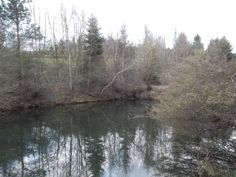 Reflections in forlom pond behind Goslar