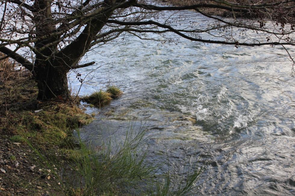 Small swirl in Innerste riverine