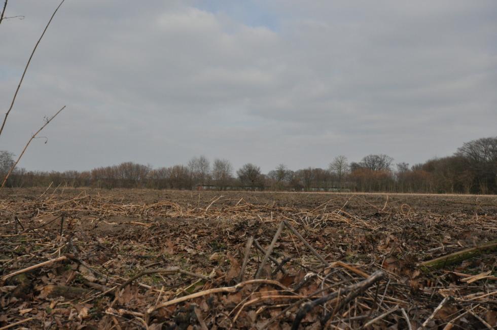 View over stubblefield near Münster