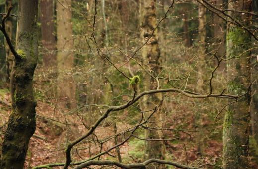 Autumn atmosphere in Harz' woods