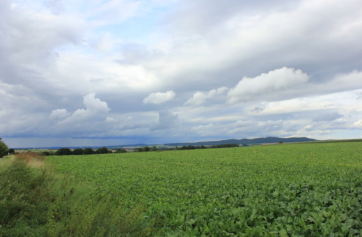 Green field up to the horizon
