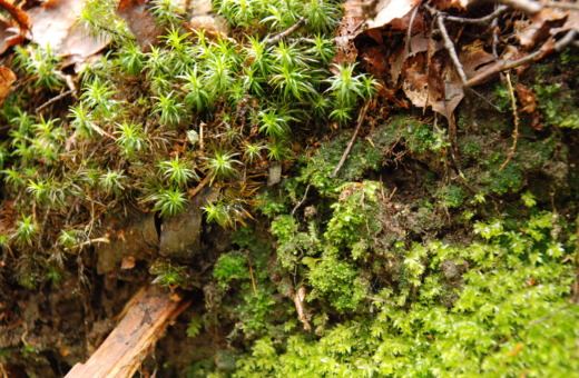 Mixture of different mosses