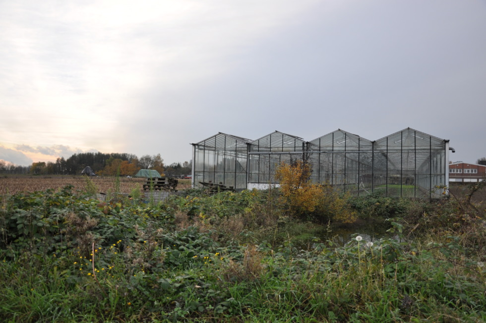 Lonely greenhouse on the fields