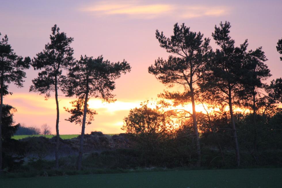 Sundown behind tree shadows