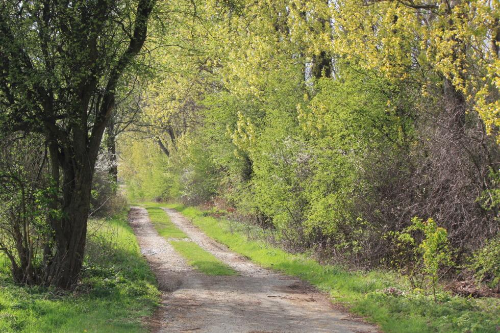 Path besides a grove