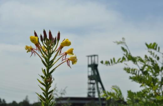 Flowers meet mines