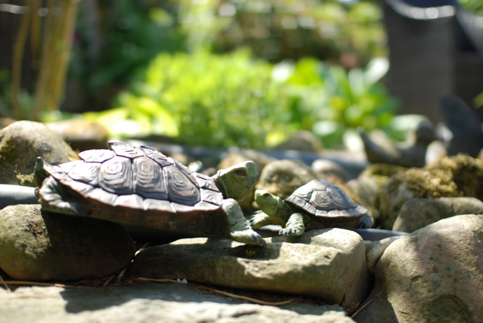 Turtle sculptures on stones