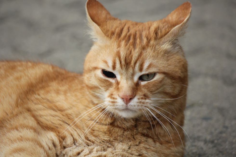 Portrait of tabby cat