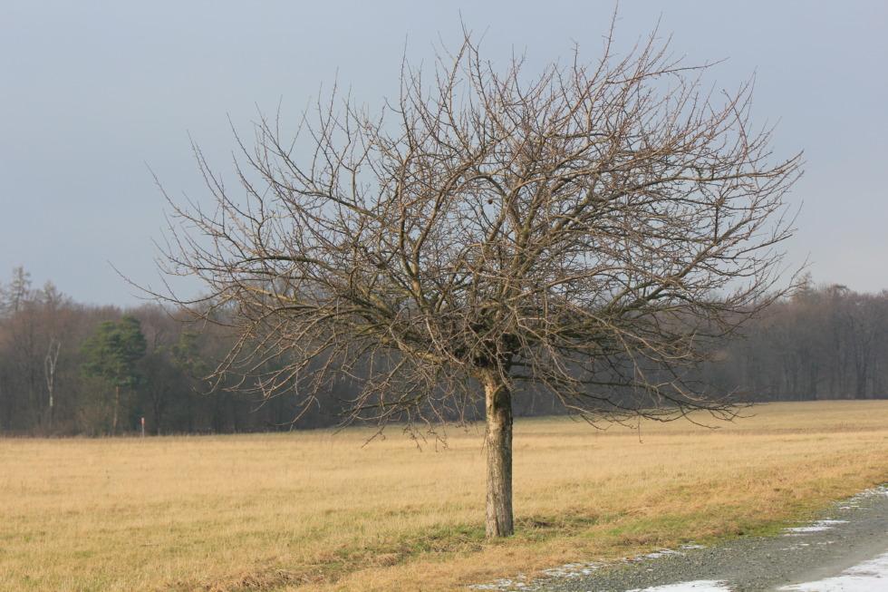 Single bare tree in autumn