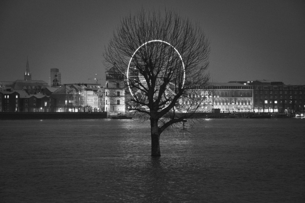 Tree in the Rhine near Düsseldorf at high water