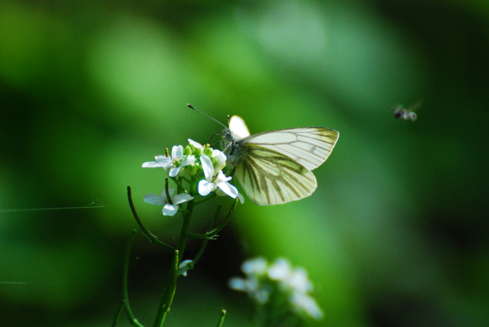 White butterfly on a flower