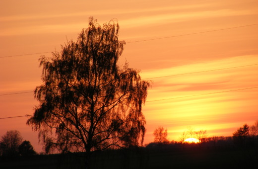 Silhouette of a tree in sunset